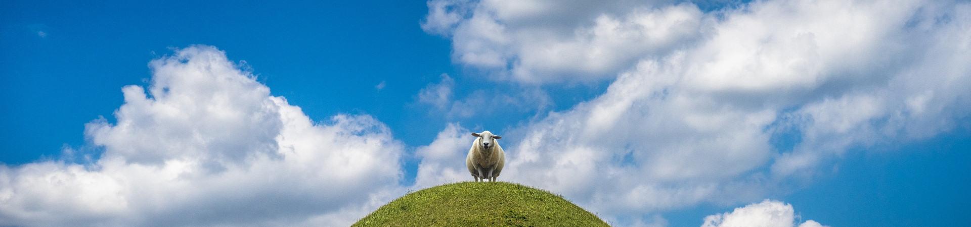 sheep_test